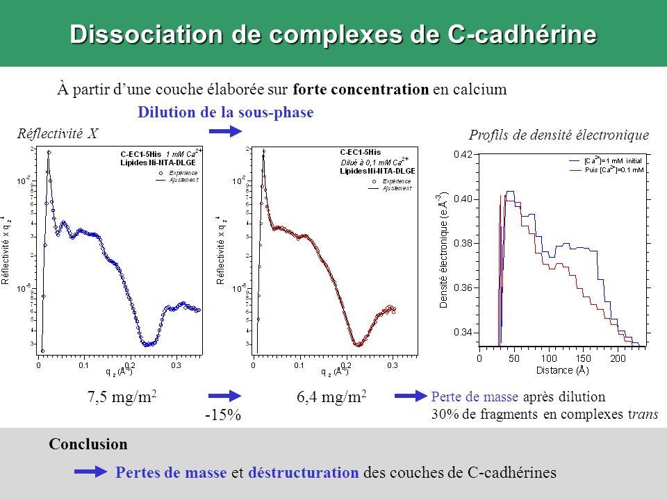 Dissociation de complexes de C-cadhérine À partir dune couche élaborée sur forte concentration en calcium Dilution de la sous-phase Réflectivité X Con