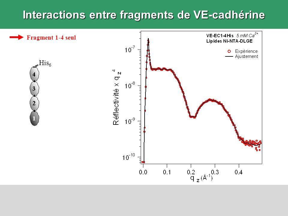 Interactions entre fragments de VE-cadhérine Fragment 1-4 seul His 6