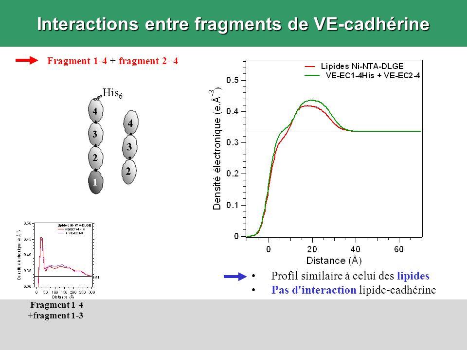 Interactions entre fragments de VE-cadhérine Fragment 1-4 + fragment 2- 4 Profil similaire à celui des lipides Pas d'interaction lipide-cadhérine Frag