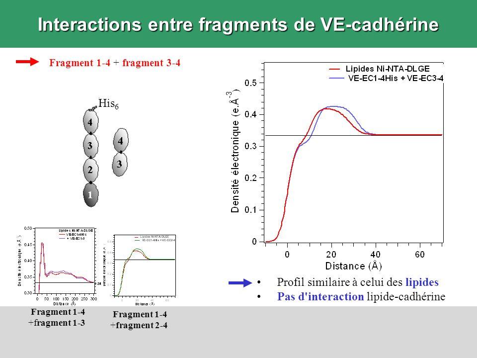 Interactions entre fragments de VE-cadhérine Fragment 1-4 + fragment 3-4 Profil similaire à celui des lipides Pas d'interaction lipide-cadhérine Fragm