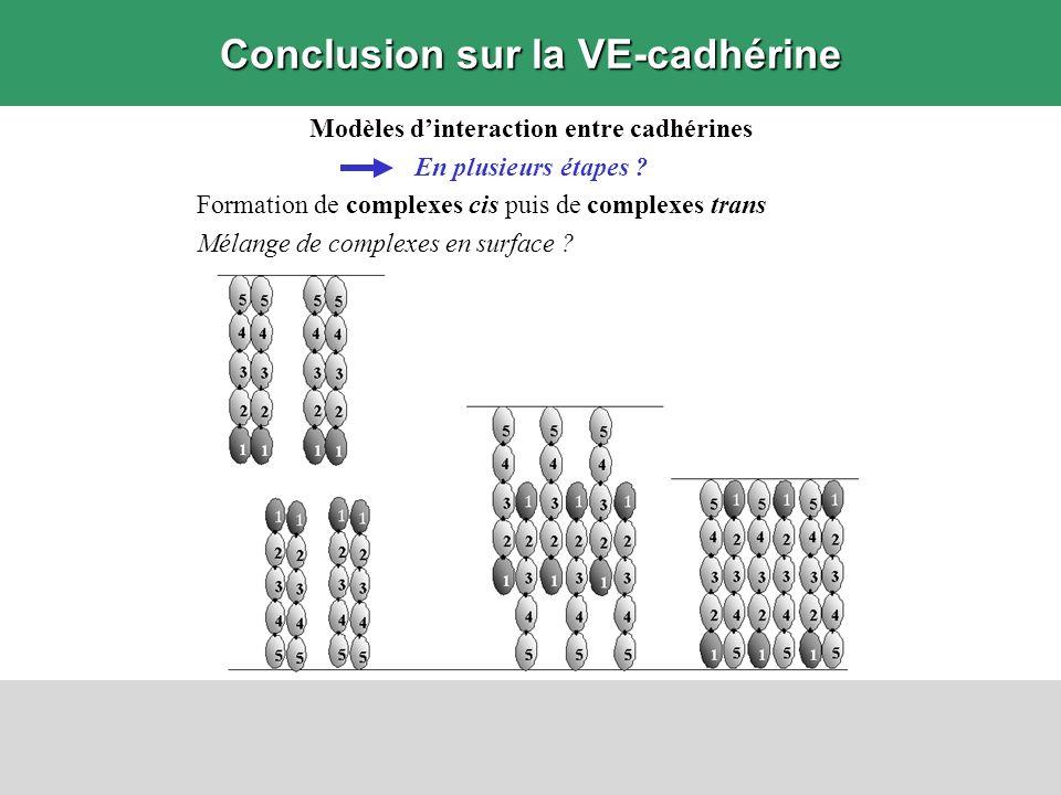Conclusion sur la VE-cadhérine Modèles dinteraction entre cadhérines En plusieurs étapes ? Formation de complexes cis puis de complexes trans Mélange