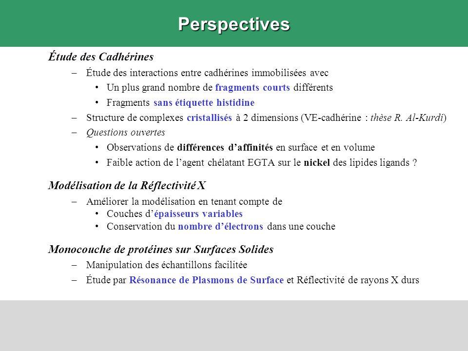 Perspectives Étude des Cadhérines –Étude des interactions entre cadhérines immobilisées avec Un plus grand nombre de fragments courts différents Fragm