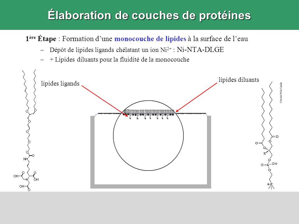 Élaboration de couches de protéines 1 ère Étape : Formation dune monocouche de lipides à la surface de leau –Dépôt de lipides ligands chélatant un ion