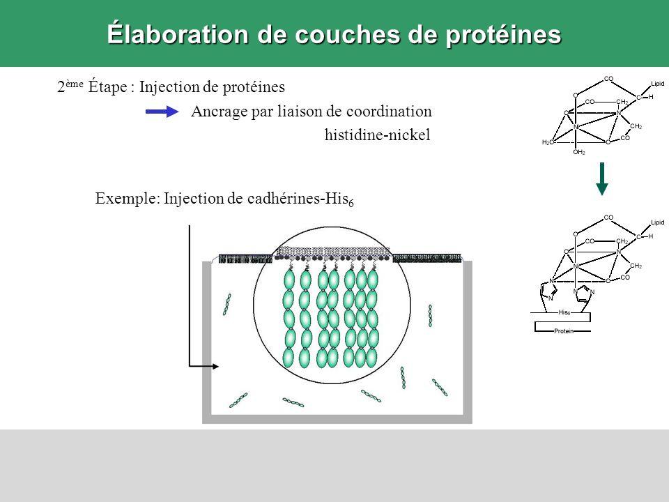 Élaboration de couches de protéines 2 ème Étape : Injection de protéines Ancrage par liaison de coordination histidine-nickel Exemple: Injection de ca