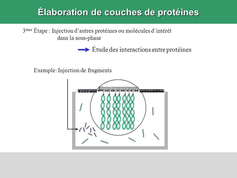 Exemple: Injection de fragments Élaboration de couches de protéines 3 ème Étape : Injection dautres protéines ou molécules dintérêt dans la sous-phase
