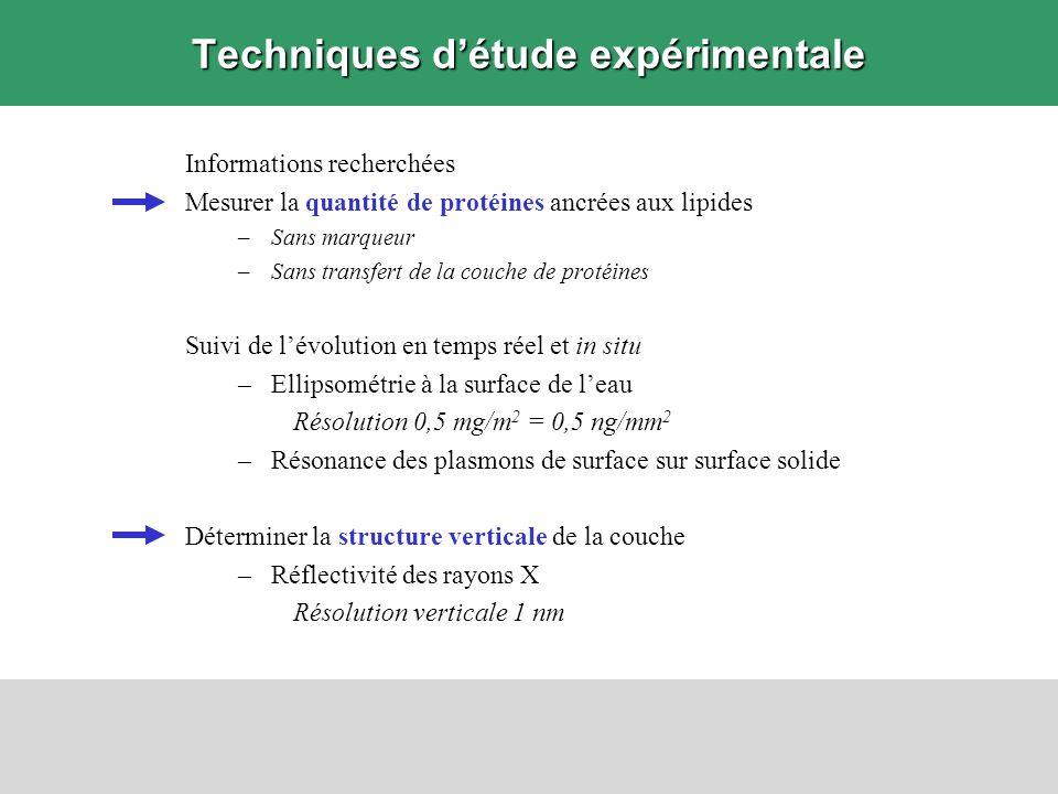 Résultats Mises au point 1.Technique délaboration de monocouches de protéines 2.Techniques expérimentales danalyse de surface complémentaires 3.Modélisation du système en multicouches Ellipsométrie Mesure des angles ellipsométriques et Ajustement pour obtenir et Estimation de la masse adsorbée apparente de protéines ancrées aux lipides Mesures cinétiques : 1 point / 3 secondes Réflectivité des rayons X Mesure de lintensité réfléchie Ajustement pour obtenir le profil de densité électronique perpendiculaire à la surface Calcul de la masse de protéines adsorbée aux lipides Application à létude des interactions entre protéines dadhérence cellulaire