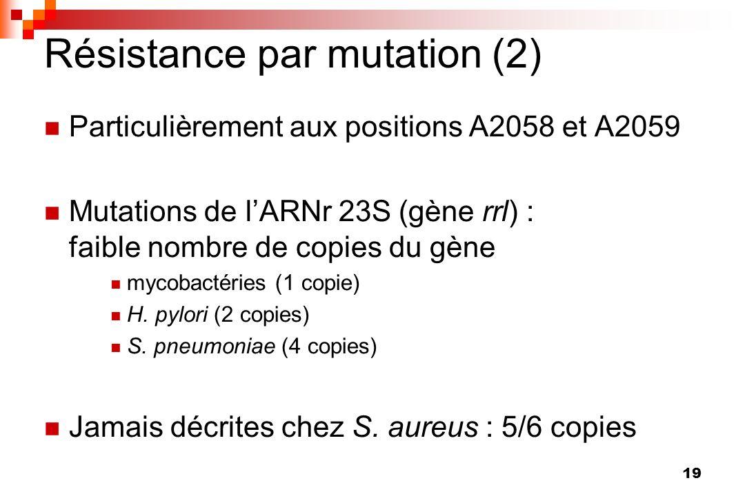 19 Particulièrement aux positions A2058 et A2059 Mutations de lARNr 23S (gène rrl) : faible nombre de copies du gène mycobactéries (1 copie) H. pylori