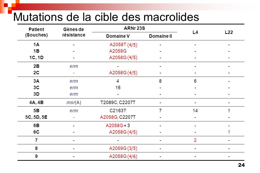 24 Mutations de la cible des macrolides Patient (Souches) Gènes de résistance ARNr 23S L4L22 Domaine VDomaine II 1A 1B 1C, 1D ------ A2058T A2059G A20