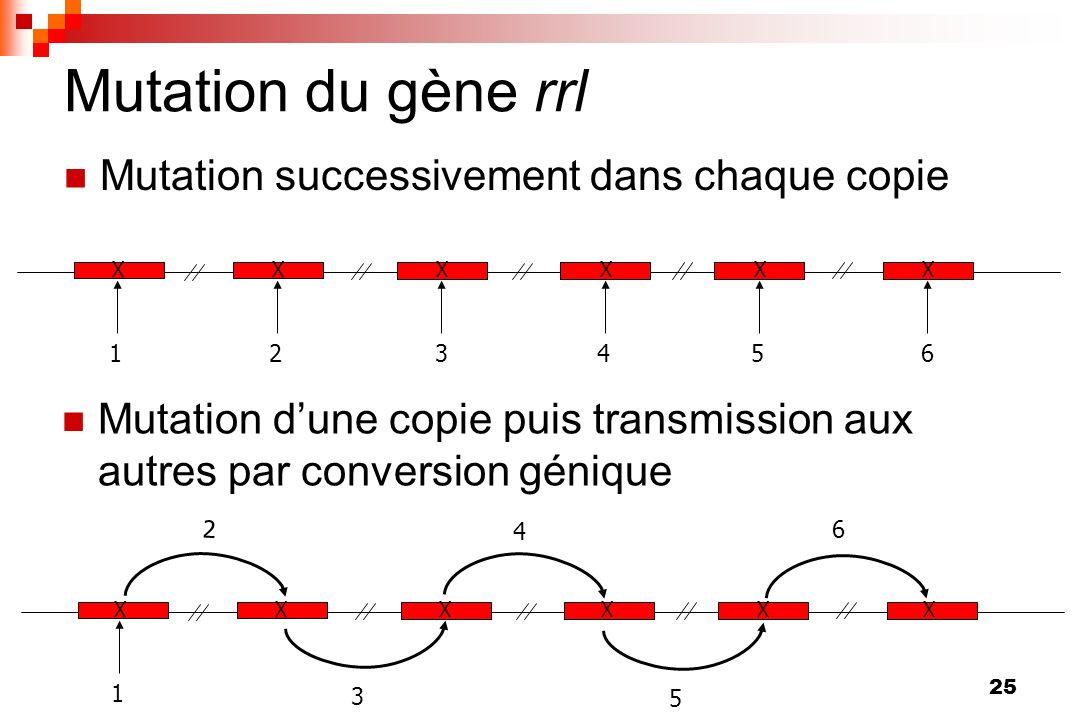 25 Mutation du gène rrl Mutation successivement dans chaque copie X 1 X 2 X 3 X 4 X 5 X 6 X 1 3 5 XXXXX 2 4 6 Mutation dune copie puis transmission au