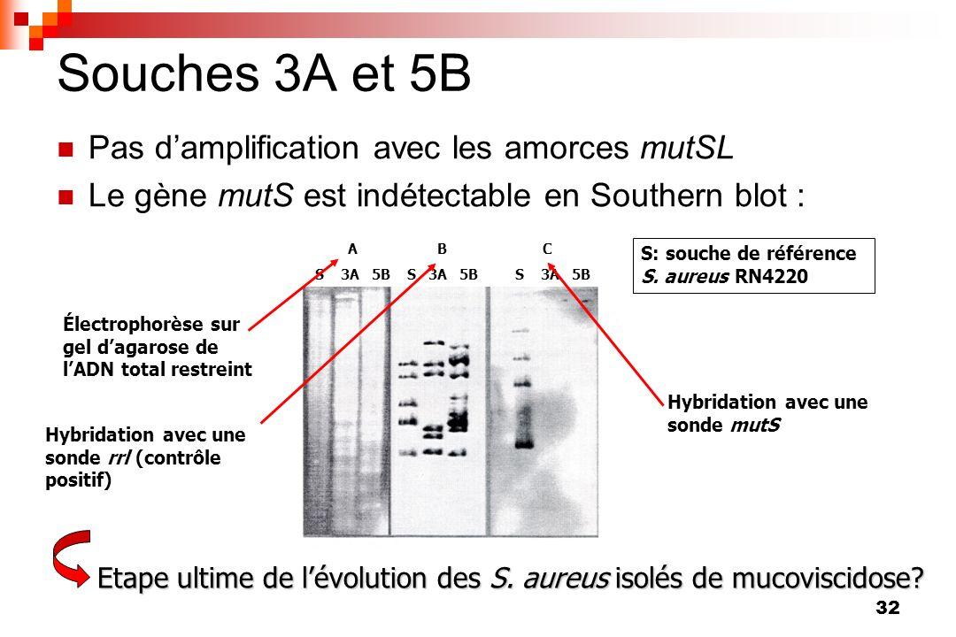 32 Souches 3A et 5B Pas damplification avec les amorces mutSL Le gène mutS est indétectable en Southern blot : A B C S 3A 5B S 3A 5B S 3A 5B S: souche