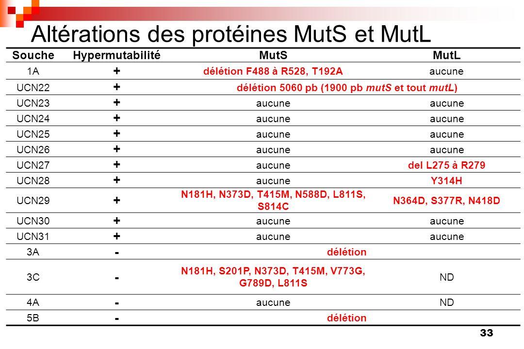 33 Altérations des protéines MutS et MutL SoucheHypermutabilitéMutSMutL 1A + délétion F488 à R528, T192Aaucune UCN22 + délétion 5060 pb (1900 pb mutS
