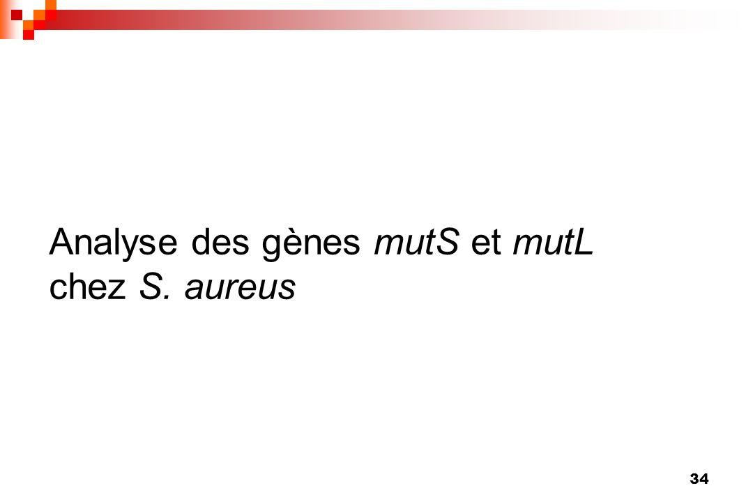 34 Analyse des gènes mutS et mutL chez S. aureus