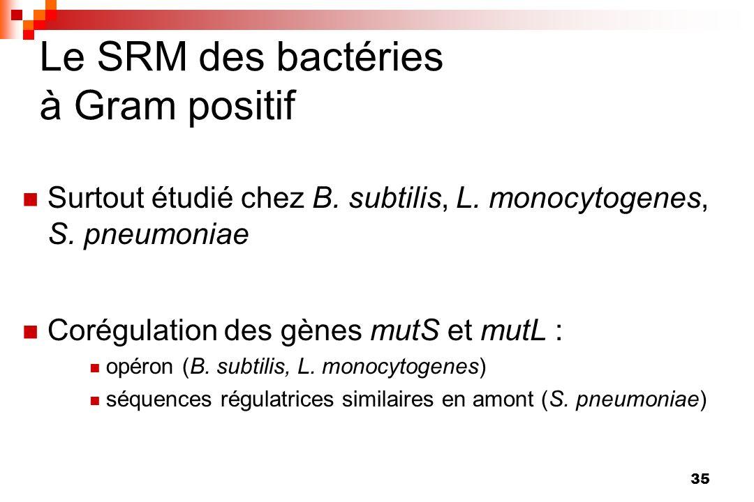 35 Le SRM des bactéries à Gram positif Surtout étudié chez B. subtilis, L. monocytogenes, S. pneumoniae Corégulation des gènes mutS et mutL : opéron (