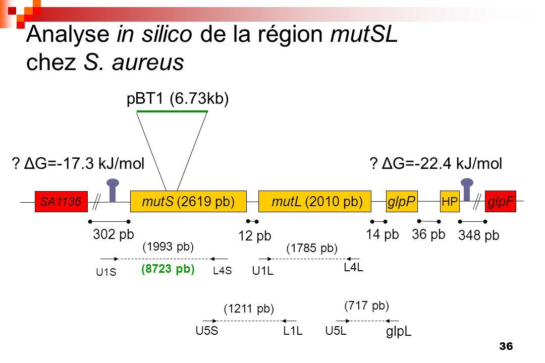 36 pBT1 (6.73kb) Analyse in silico de la région mutSL chez S. aureus U1S L4S (1993 pb) (8723 pb) U5SL1L (1211 pb) U5L glpL (717 pb) U1L L4L (1785 pb)