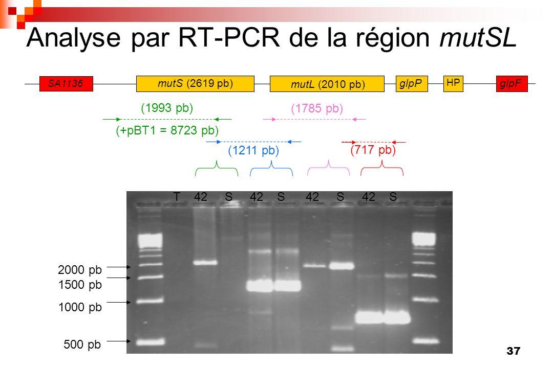 37 Analyse par RT-PCR de la région mutSL 500 pb 1000 pb 1500 pb 2000 pb T 42 S 42 S 42 S 42 S glpF SA1136 mutS (2619 pb) mutL (2010 pb) glpP HP (1993