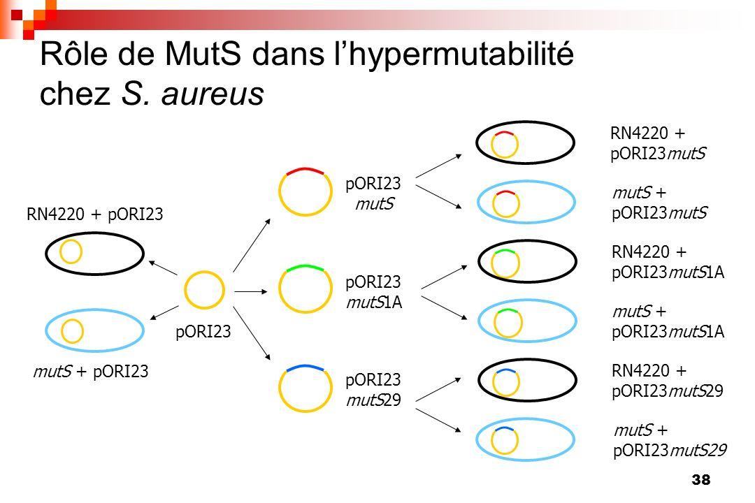 38 Rôle de MutS dans lhypermutabilité chez S. aureus pORI23 pORI23 mutS pORI23 mutS1A pORI23 mutS29 RN4220 + pORI23mutS mutS + pORI23mutS RN4220 + pOR