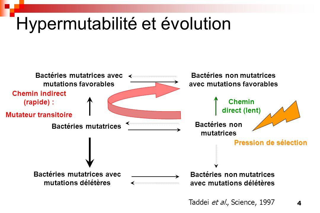 4 Bactéries non mutatrices avec mutations favorables Hypermutabilité et évolution Bactéries non mutatrices avec mutations délétères Bactéries mutatric