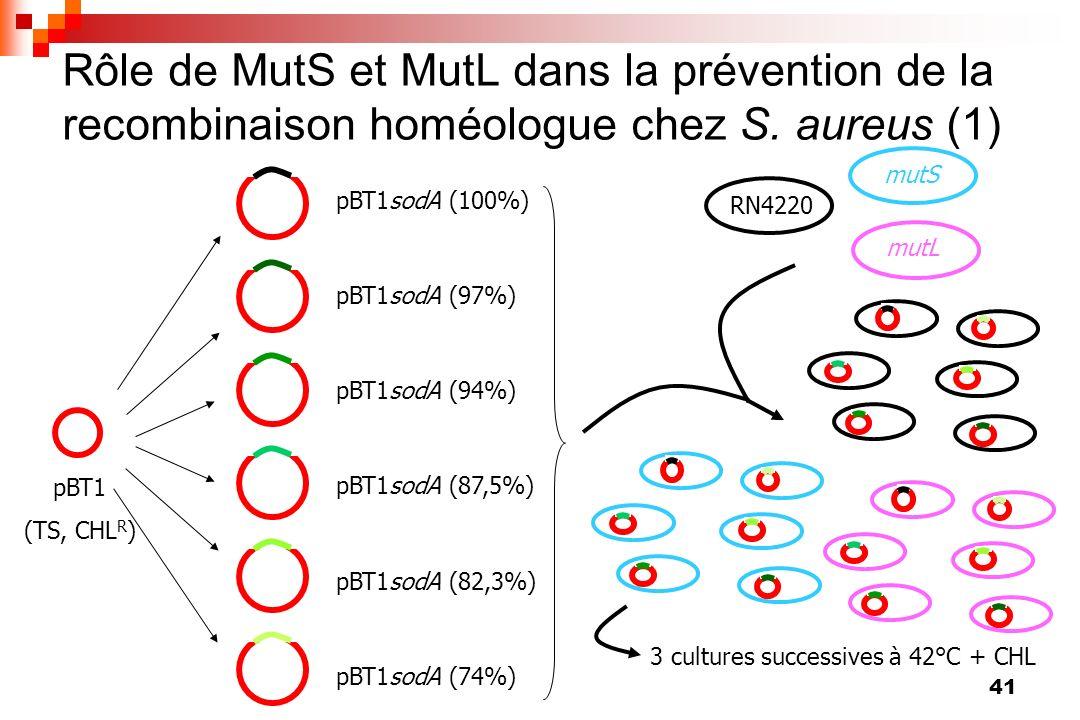 41 Rôle de MutS et MutL dans la prévention de la recombinaison homéologue chez S. aureus (1) pBT1 (TS, CHL R ) pBT1sodA (100%) pBT1sodA (97%) pBT1sodA
