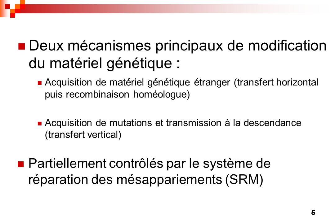 5 Deux mécanismes principaux de modification du matériel génétique : Partiellement contrôlés par le système de réparation des mésappariements (SRM) Ac