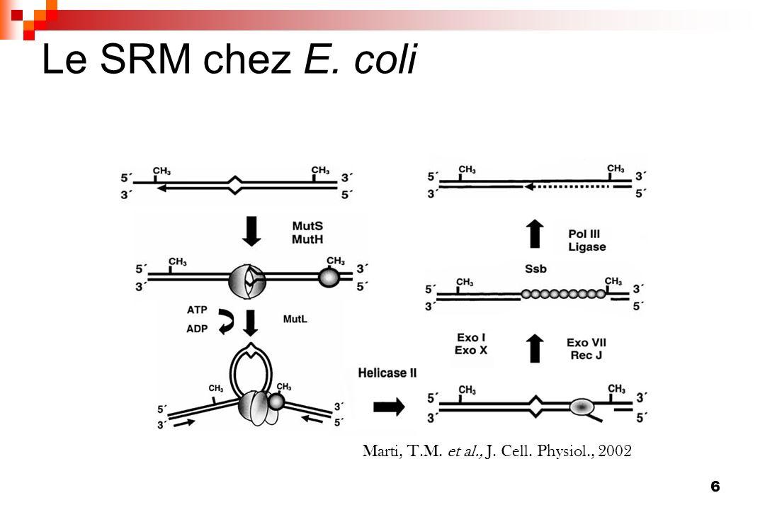 27 Mutations des gènes domestiques Détection daltérations de gènes domestiques chez les souches accumulant de nombreuses mutations ribosomales : sodA : résistance au stress oxydatif spa : adhésion