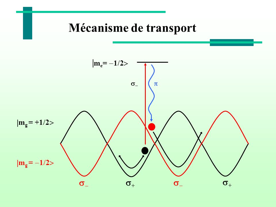 Mécanisme de transport + m g = +1/2 m g = 1/2 + | m e = 1/2