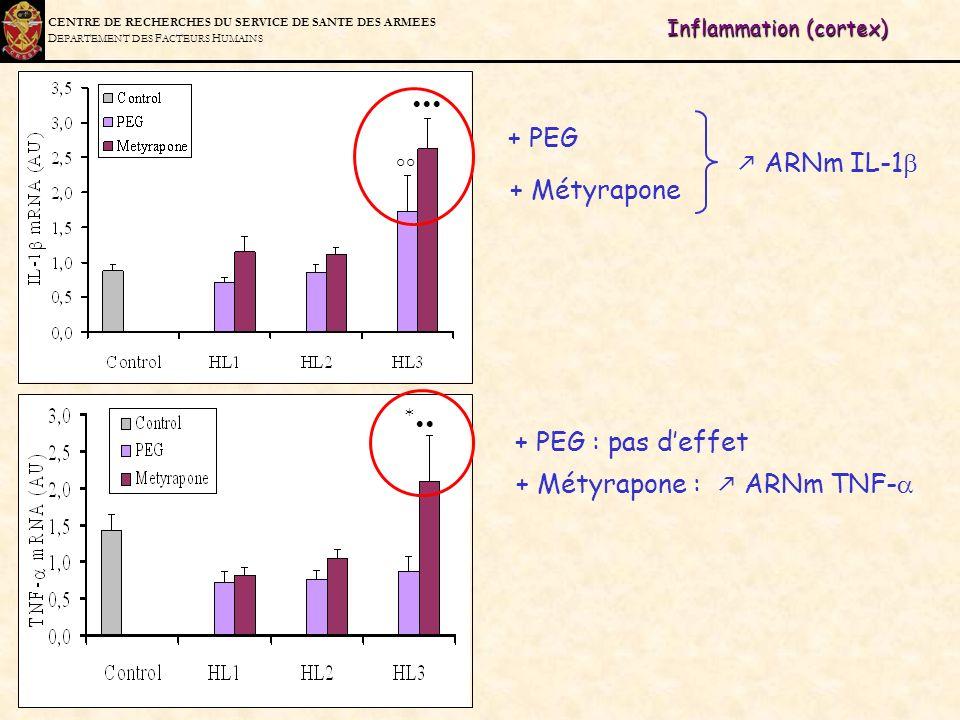 C ENTRE DE R ECHERCHES DU S ERVICE DE S ANTE DES A RMEES D EPARTEMENT DES F ACTEURS H UMAINS Inflammation (cortex) * °° ARNm IL-1 + PEG + PEG : pas de