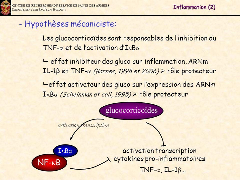 C ENTRE DE R ECHERCHES DU S ERVICE DE S ANTE DES A RMEES D EPARTEMENT DES F ACTEURS H UMAINS - Hypothèses mécaniciste: Les glucocorticoïdes sont respo