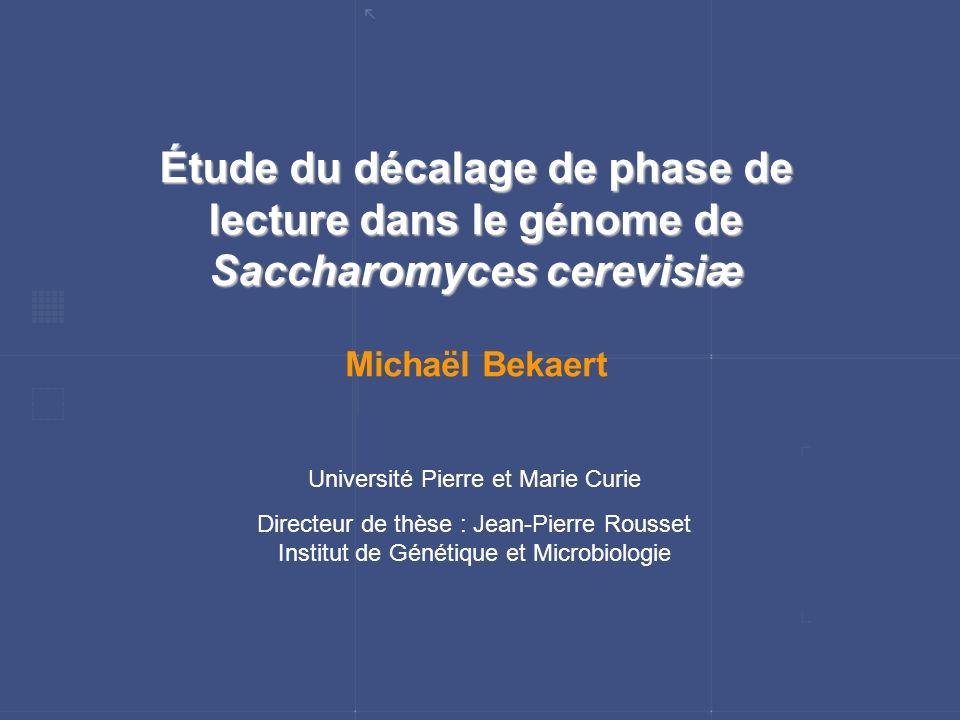 Étude du décalage de phase de lecture dans le génome de Saccharomyces cerevisiæ Michaël Bekaert Université Pierre et Marie Curie Directeur de thèse :