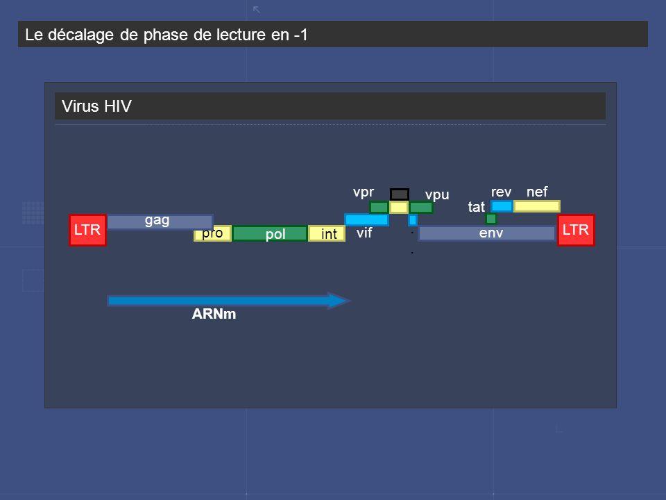 Virus HIV Le décalage de phase de lecture en -1. rev tat nef vif vpr vpu pol proenv gag LTR int ARNm