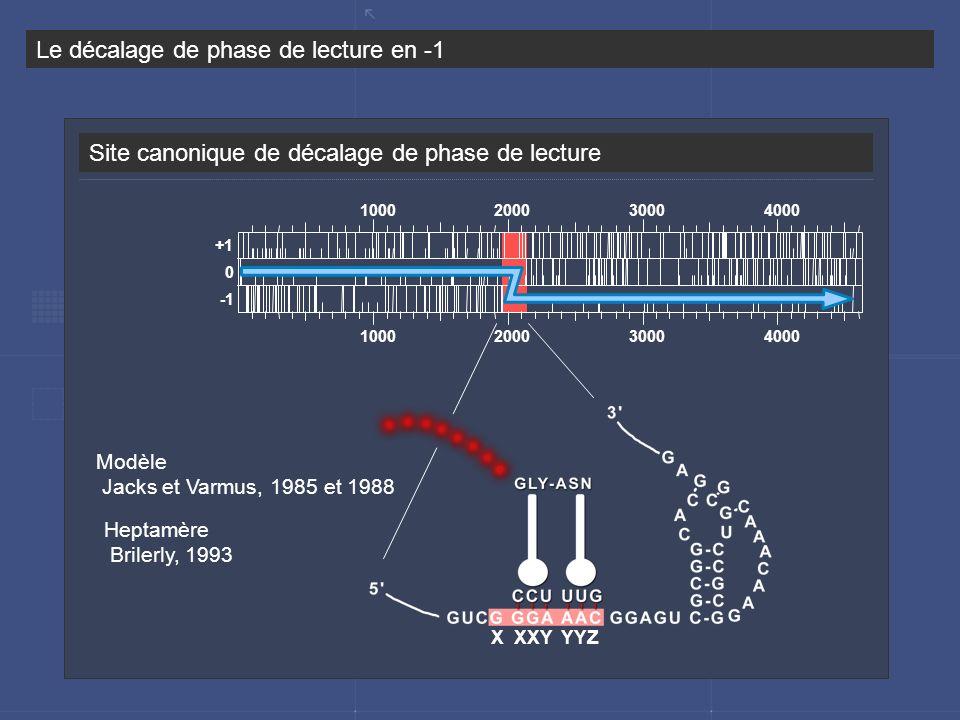 Site canonique de décalage de phase de lecture Le décalage de phase de lecture en -1 Modèle Jacks et Varmus, 1985 et 1988 1000 2000 3000 4000 +1 0 X X