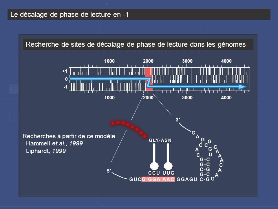 Recherche de sites de décalage de phase de lecture dans les génomes Le décalage de phase de lecture en -1 Recherches à partir de ce modèle Hammell et