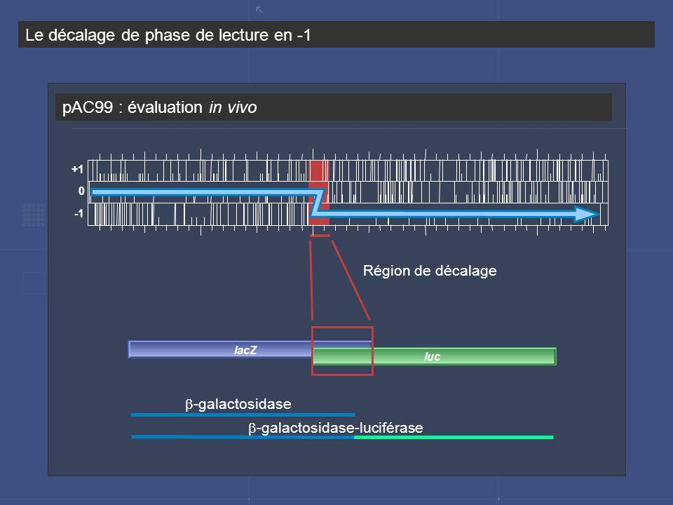 pAC99 : évaluation in vivo Le décalage de phase de lecture en -1 -galactosidase -galactosidase-luciférase Région de décalage lacZ luc +1 0