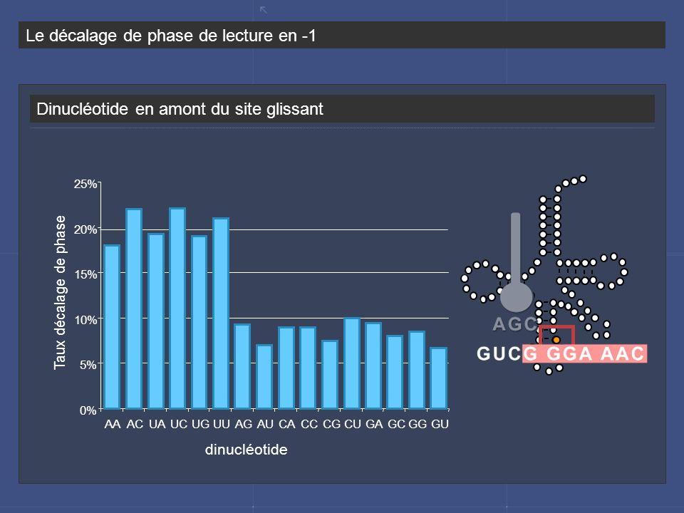 Dinucléotide en amont du site glissant Le décalage de phase de lecture en -1 0% 5% 10% 15% 20% 25% AAACUAUCUGUUAGAUCACCCGCUGAGCGGGU dinucléotide Taux