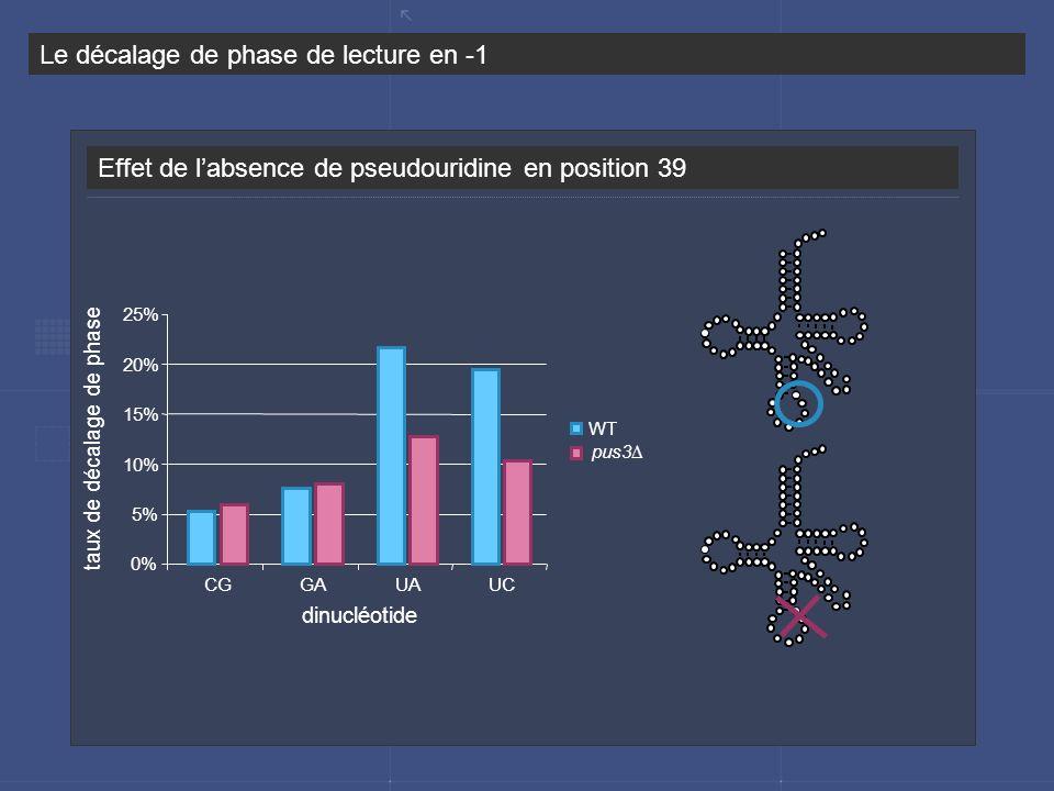 Effet de labsence de pseudouridine en position 39 Le décalage de phase de lecture en -1 0% 5% 10% 15% 20% 25% CGGAUAUC WT pus3 dinucléotide taux de dé