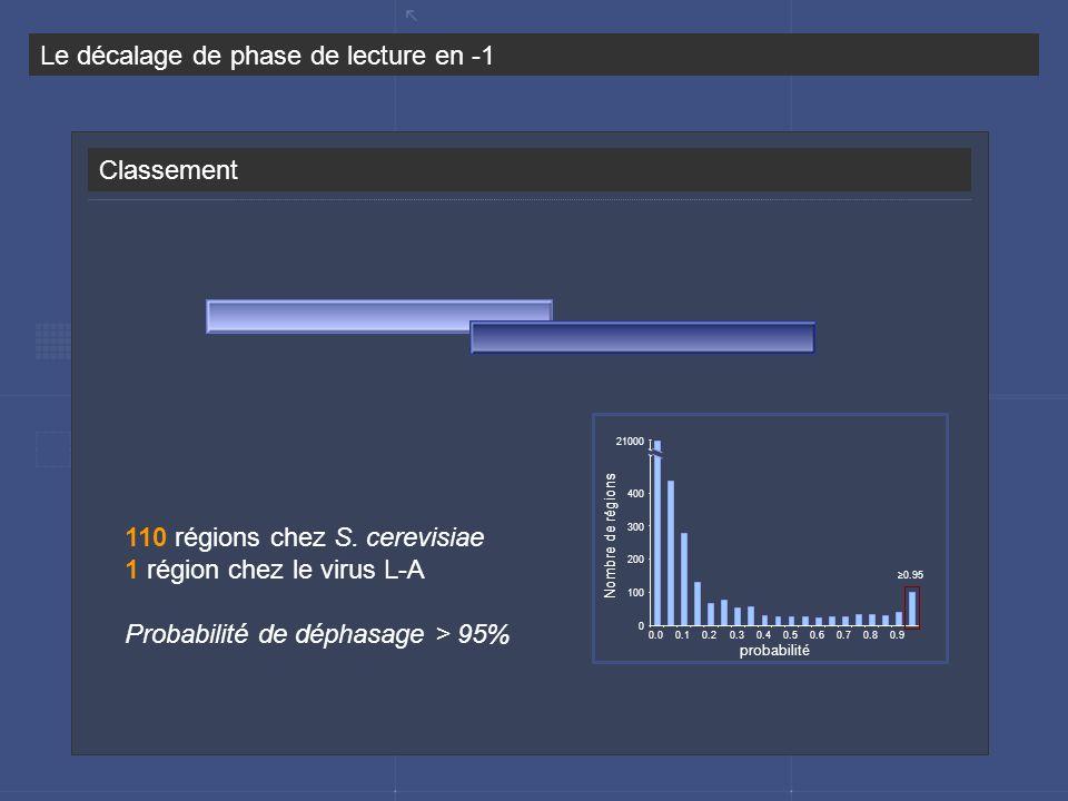 Classement Le décalage de phase de lecture en -1 110 régions chez S. cerevisiae 1 région chez le virus L-A Probabilité de déphasage > 95% 0 100 200 30