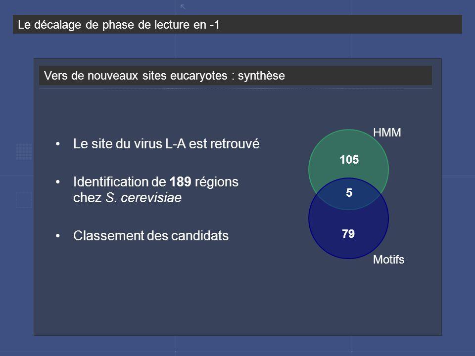 Vers de nouveaux sites eucaryotes : synthèse Le décalage de phase de lecture en -1 79 5 105 Le site du virus L-A est retrouvé Identification de 189 ré