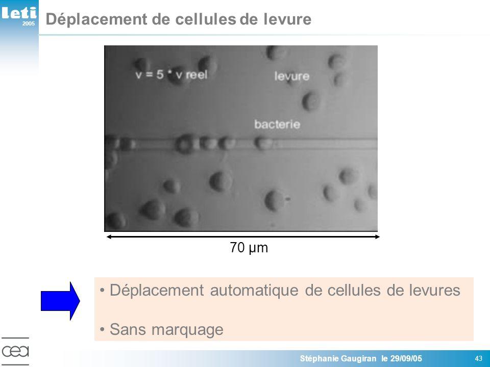 2005 Stéphanie Gaugiran le 29/09/05 43 Déplacement de cellules de levure Déplacement automatique de cellules de levures Sans marquage 70 µm