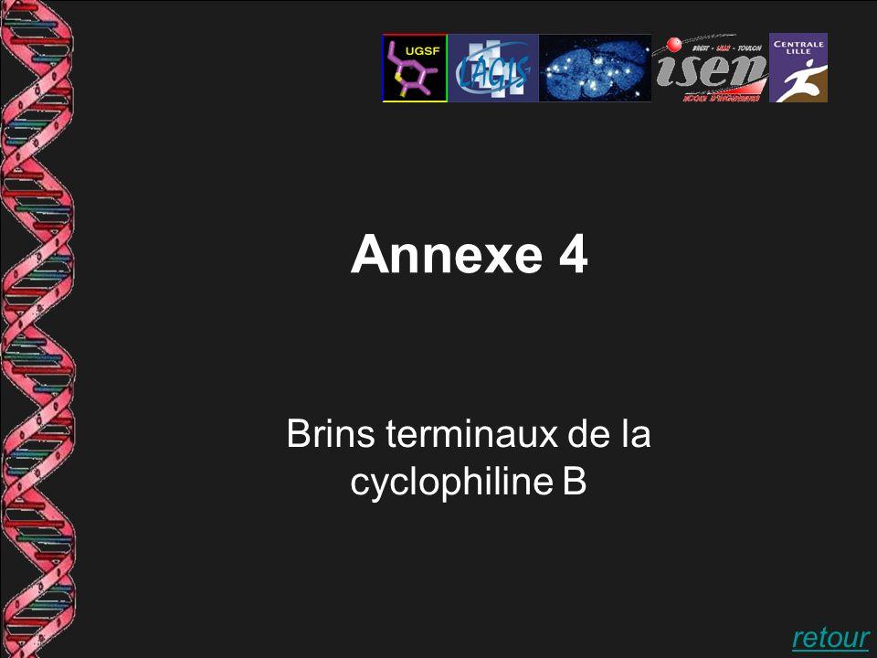 Annexe 4 Brins terminaux de la cyclophiline B retour