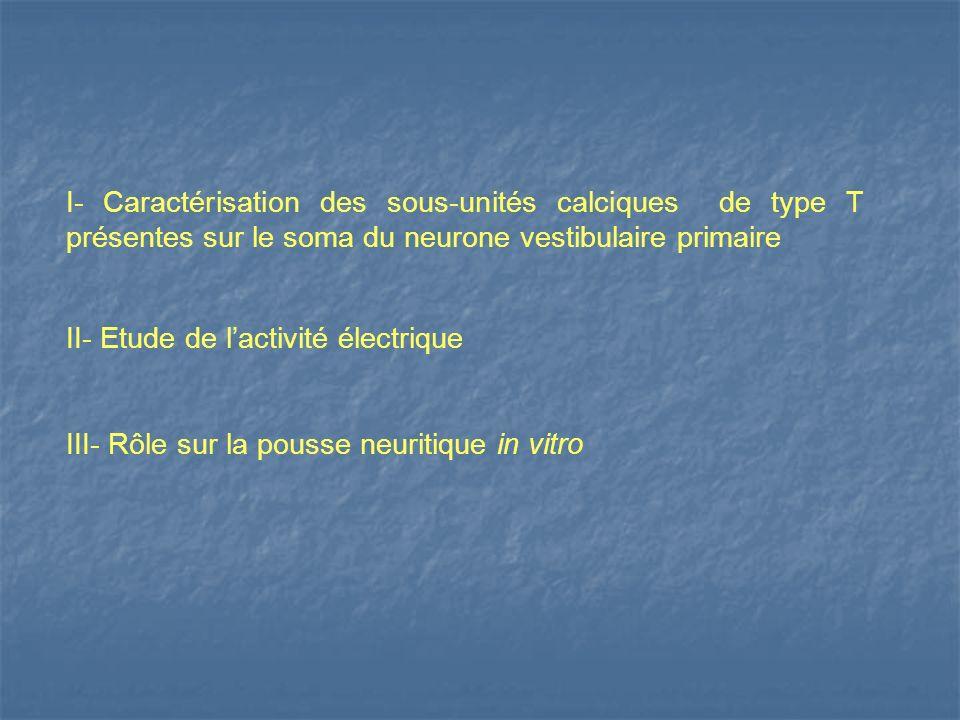 I- Caractérisation des sous-unités calciques de type T présentes sur le soma du neurone vestibulaire primaire II- Etude de lactivité électrique III- R