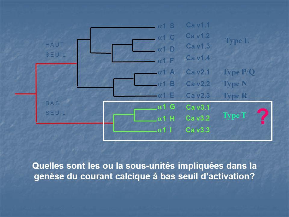 Quelles sont les ou la sous-unités impliquées dans la genèse du courant calcique à bas seuil dactivation? HAUT SEUIL BAS SEUIL 1 S 1 C 1 D 1 F 1 A 1 B