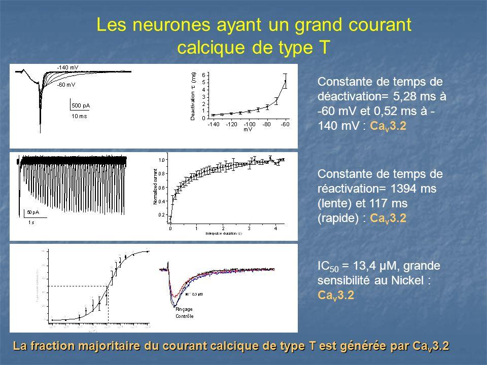Les neurones ayant un grand courant calcique de type T Constante de temps de déactivation= 5,28 ms à -60 mV et 0,52 ms à - 140 mV : Ca v 3.2 Constante