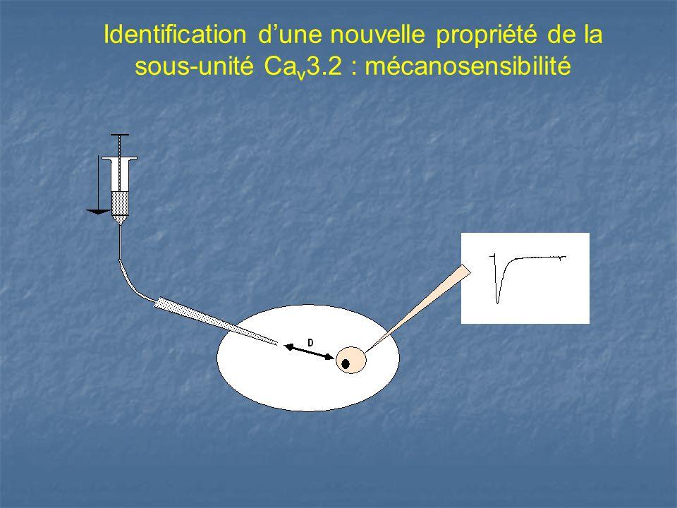 Identification dune nouvelle propriété de la sous-unité Ca v 3.2 : mécanosensibilité