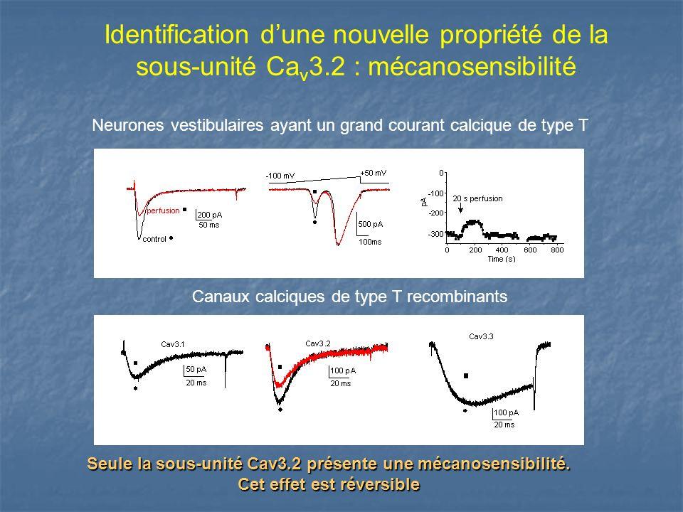 Neurones vestibulaires ayant un grand courant calcique de type T Canaux calciques de type T recombinants Seule la sous-unité Cav3.2 présente une mécan
