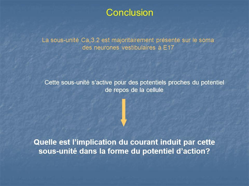 Quelle est limplication du courant induit par cette sous-unité dans la forme du potentiel daction? La sous-unité Ca v 3.2 est majoritairement présente