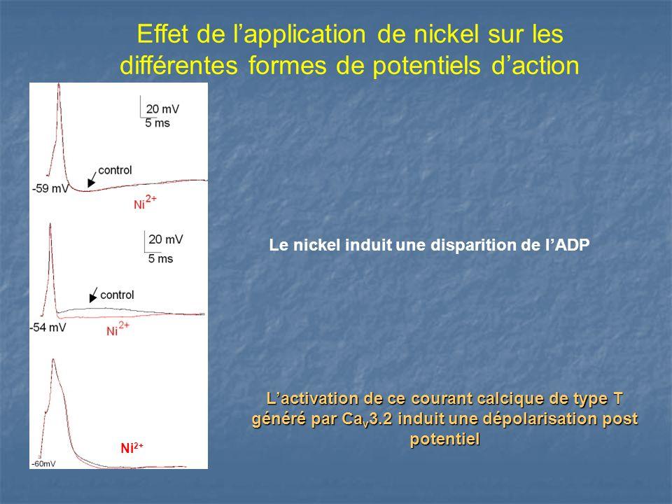 Effet de lapplication de nickel sur les différentes formes de potentiels daction Le nickel induit une disparition de lADP Lactivation de ce courant ca