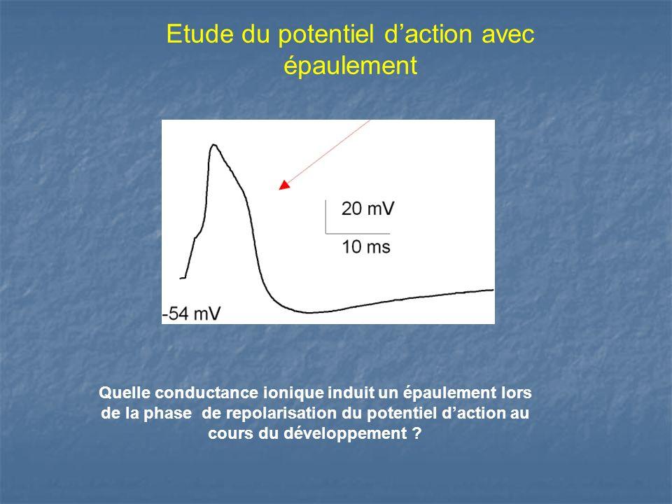 Etude du potentiel daction avec épaulement Quelle conductance ionique induit un épaulement lors de la phase de repolarisation du potentiel daction au