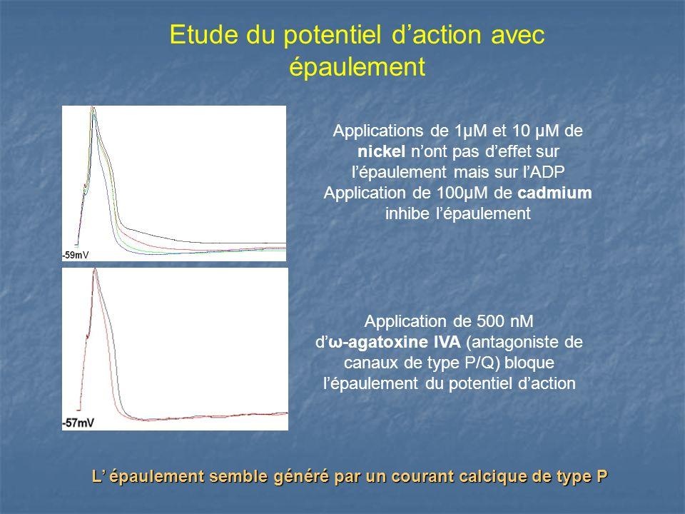 Etude du potentiel daction avec épaulement Applications de 1µM et 10 µM de nickel nont pas deffet sur lépaulement mais sur lADP Application de 100µM d