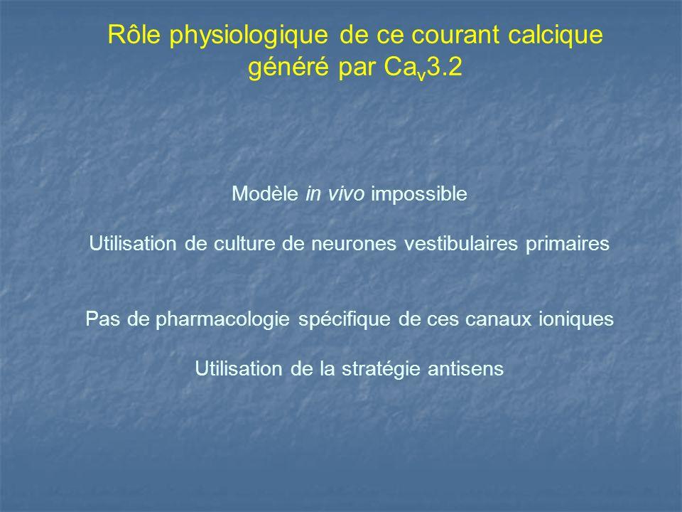 Modèle in vivo impossible Utilisation de culture de neurones vestibulaires primaires Pas de pharmacologie spécifique de ces canaux ioniques Utilisatio