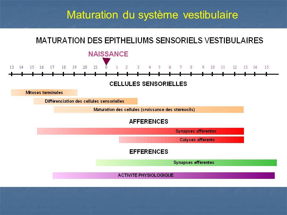 Maturation du système vestibulaire