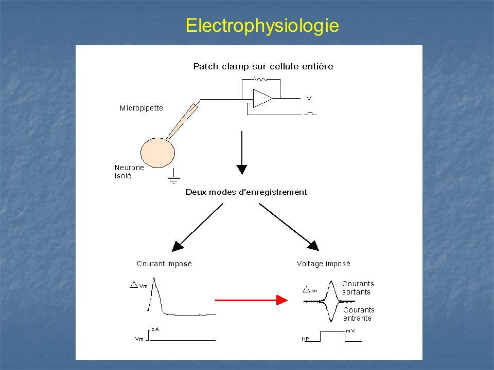 Electrophysiologie